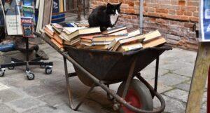 black and white cat sitting on wheelbarrow of books