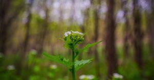 flower growing in wisconsin outdoors