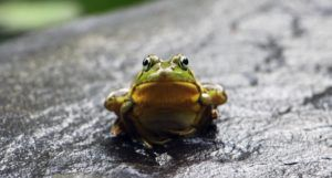 image of a green frog on a grey surface https://unsplash.com/photos/rDrcMdvXzUw