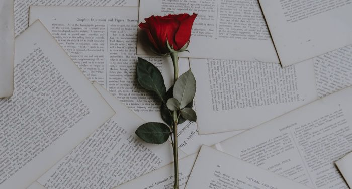 single rose on book pages for love and romance feature