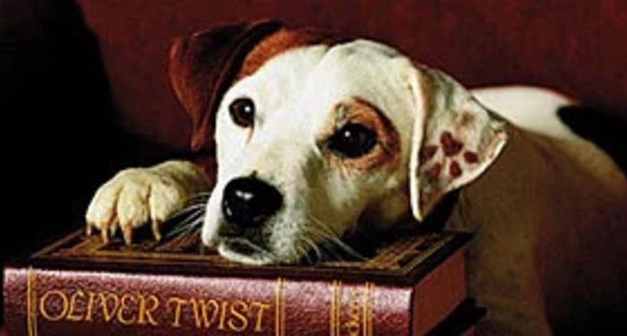 A photo of Wishbone the Jack Russell Terrier resting his head and one paw on Oliver Twist